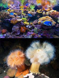 Флора и Фауна Японского моря