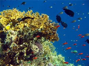 Фауна Японского моря
