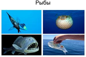 Рыбы Японского моря