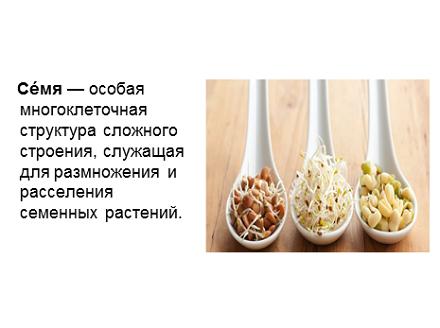 1 слайд