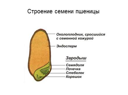 13 слайд