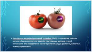 GMO-1