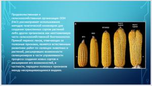 GMO-3