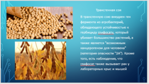 GMO-9